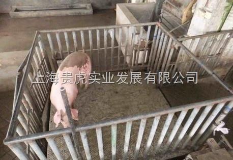 动物秤价格 称羊秤 称猪地秤2吨