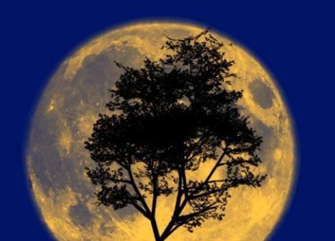"NASA为""韩国月球探测计划""寻求仪器仪表支持"
