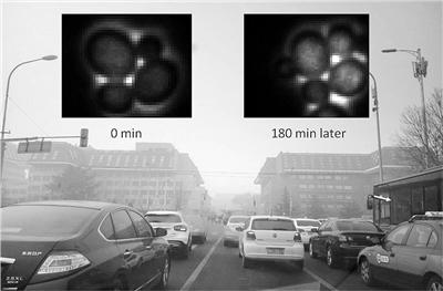 小小酵母菌实现PM2.5毒性指标实时在线监测