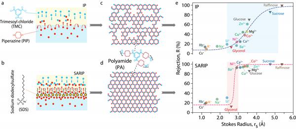 利用界面聚合過程調控制備亞埃級超高分離精度納濾膜